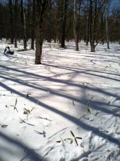 雪原を行ってます